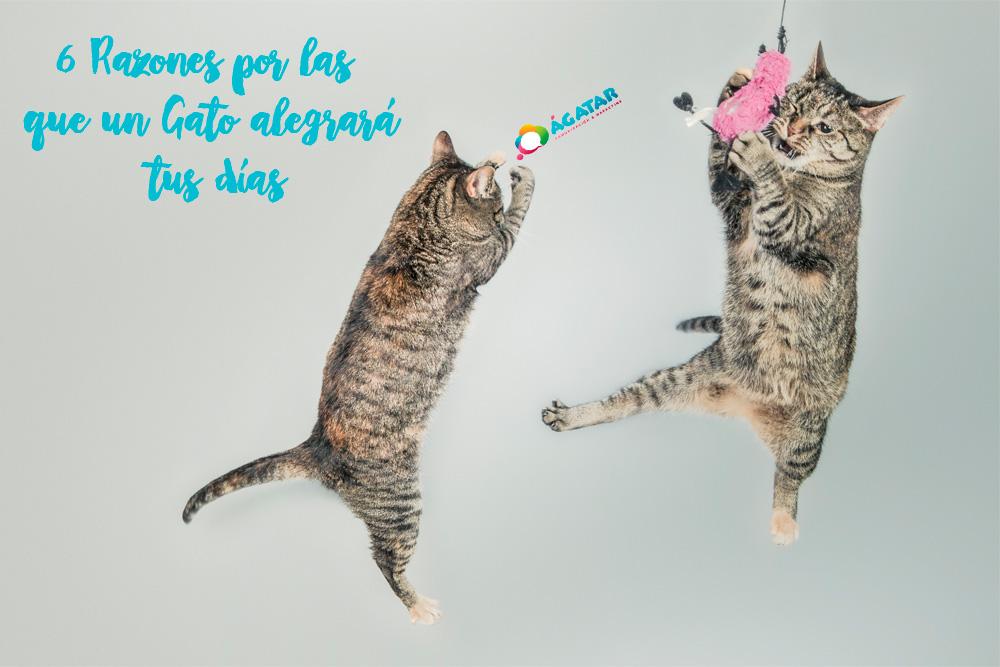 razones por las que un gato alegra tus dias