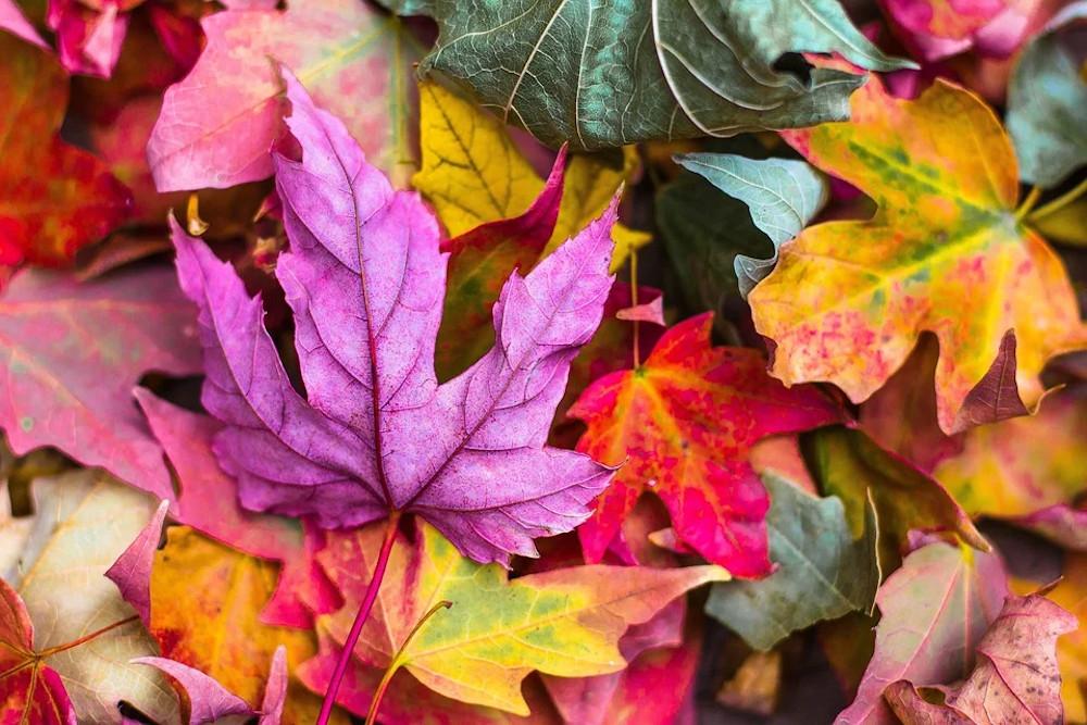 Otoño escapada hojas